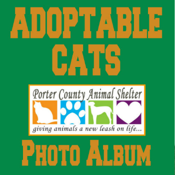 adoptable cat poster